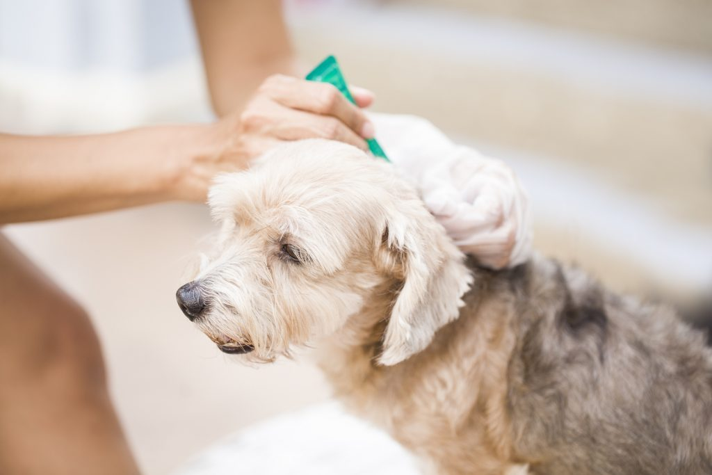 Don't Sweat Your Pets: Summer Pet Dangers and How to Treat and Prevent Them